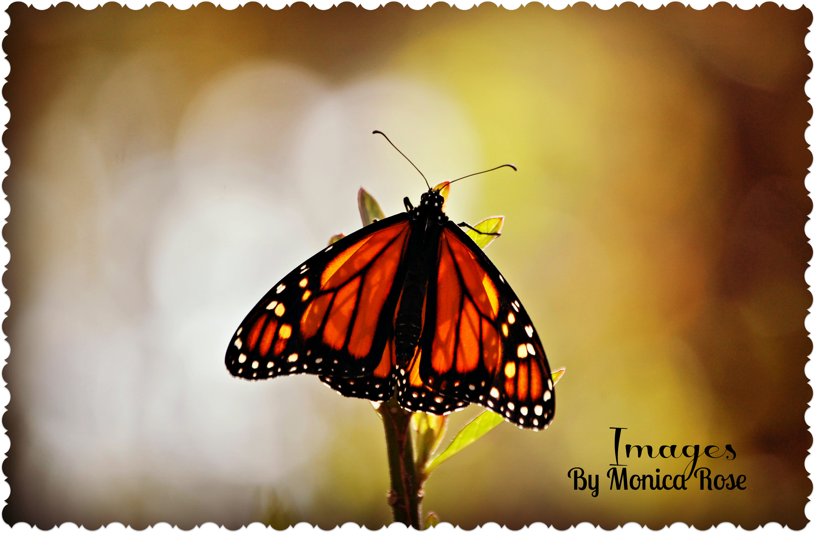 Just living is not enough said thebutterfly,
